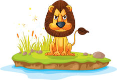 Lion on island Stock Image