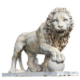 Lion isolated Royalty Free Stock Image