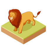 Lion isometric icon2 Stock Images