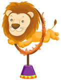 lion jumping through the flaming ring Royalty Free Stock Images