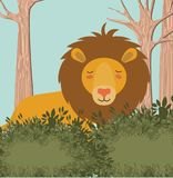 Lion in the jungle scene Royalty Free Stock Images