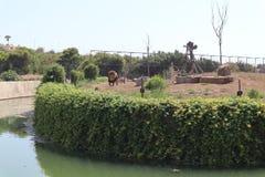 Lion King in de tuin stock afbeeldingen
