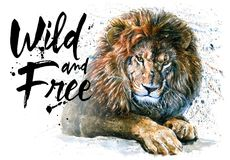 Lion watercolor painting predator animals King of animals wild & free vector illustration