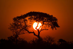 Lion King Sunset Stock Image