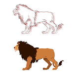 Lion king. Vector isolated animal. Stock Photography