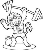 Lion lift heavy barbell Stock Photography