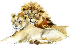 Lion. Lion pride illustration watercolor. Lion. Lion pride watercolor illustration. Lion family Stock Image