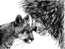 Lion and lioness looking at each other. Vector illustration drawn with drafting ink Stock Photo