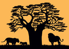 A lion and a lioness near the baobab. Royalty Free Stock Images
