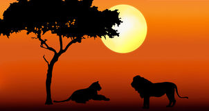 Lion and lioness in sunset. Illustration of Acacia with lion and lioness in silhouette during sunrise in africa Stock Image