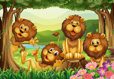 Lion living in the jungle Royalty Free Stock Image