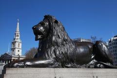 Lion in London's Trafalgar Square. Lion statue in Trafalgar Square, London Stock Photo
