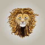 Lion with long wavy curls on the mane.  Royalty Free Stock Photos
