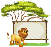 A lion looking at the bee Royalty Free Stock Images