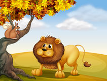 A lion looking at the squirrel. Illustration of a lion looking at the squirrel Stock Image