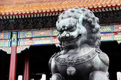Lion made from copper taken infront of the Forbidden City in Beijing, China (it's a bit wet from the rain) Stock Photography