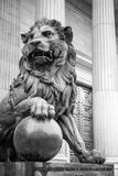 Lion Madrid Stock Image