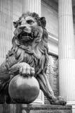 Lion Madrid Stock Image