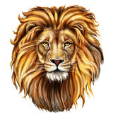 Lion male, aslan Royalty Free Stock Photo