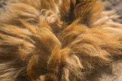 Lion Mane Texture arkivbilder