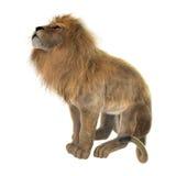 lion masculin du rendu 3D sur le blanc Image stock