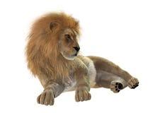 lion masculin du rendu 3D sur le blanc Photographie stock