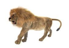 lion masculin du rendu 3D sur le blanc Photos libres de droits
