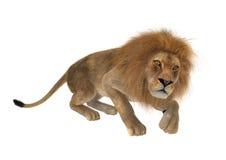 lion masculin du rendu 3D sur le blanc Images stock