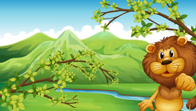 A lion in a mountain scenery Stock Photography