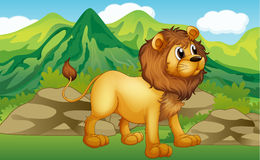 A lion in a mountain scenery Royalty Free Stock Photography
