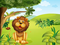 A lion near the big tree Royalty Free Stock Images