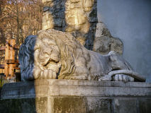Lion near castle. Beautiful old castle in Ukraine. Beautiful old castle in Poland. KrasicinStatue of Lion in Lviv. Ukraine Stock Photo