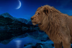 Lion at the night lake under moon and stars wallpaper stock photo