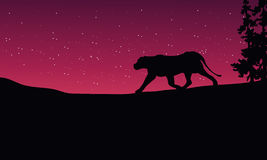 Lion at night scenery silhouettes Royalty Free Stock Photos