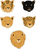 Lion, panther, leopard, tiger and lioness. Isolated on white background Royalty Free Stock Images