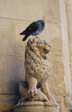 Lion and pigeon stock image