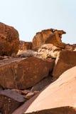 Lion Plate med Lion Man och annan förhistorisk obygdsbo vaggar gravyrer på Twyfelfontein Royaltyfri Bild