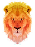Lion  polygon triangulate animal lowpoly. Lion  polygon geometric style. Vector illustration. Abstract lion. Low poly Royalty Free Stock Photo