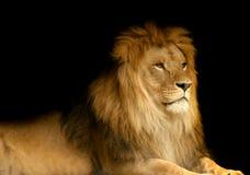 Lion. Portrait of a lion against black background Stock Photo