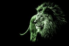 lion portrait in bright green colours royalty free stock photos