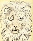 Lion Portrait Stock Photography