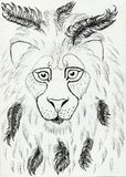 Lion Portrait Stock Photos
