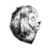 Lion proud, face in profile. Looking into the distance, sketch, vector, black-and-white drawing Royalty Free Stock Photo