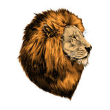 Lion proud, face in profile. Looking into the distance, sketch, vector, color image, mane of red hair royalty free illustration