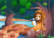 A lion reading a book above the root of a big tree Royalty Free Stock Image