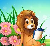 A lion reading a book at the garden Stock Images