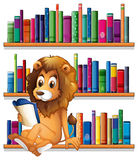 A lion reading a book while sitting on a bookshelf Stock Photography