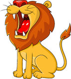 Lion roaring Royalty Free Stock Photography