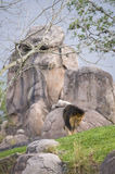 Lion and rock formation Stock Photos