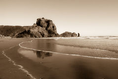 Lion Rock on the Piha Beach , New Zealand. West coast of North New Zealand Island.Piha beach stock image